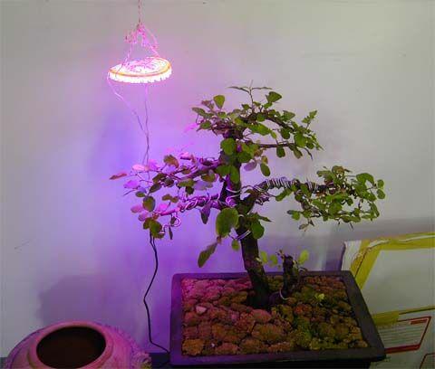 ++kasetloongkim.com++ Forums-viewtopic-เร่งโตพืชด้วยแสงไฟ...