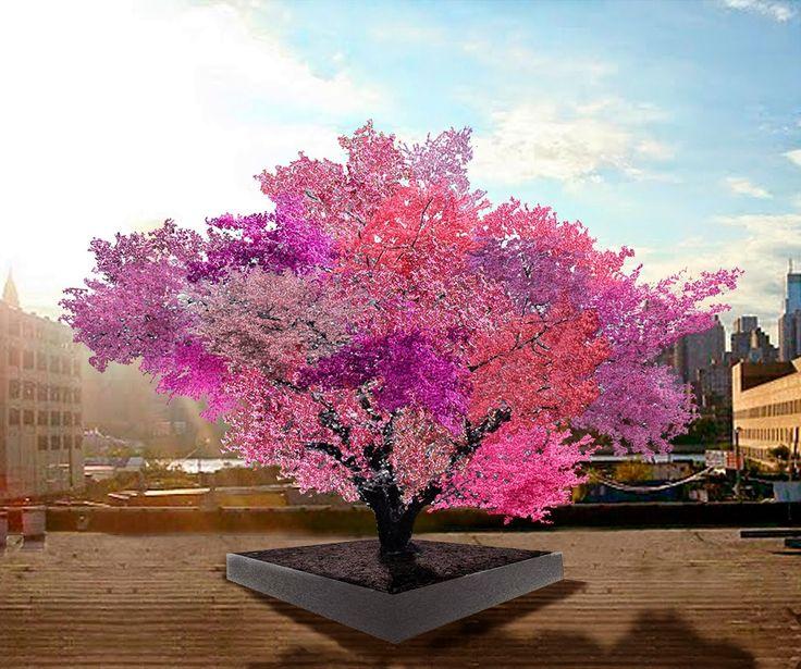 El árbol de los cuarenta tipos de fruta Sam Van Aken injerta árboles frutales para conseguir que un único árbol de más de cuarenta tipos de...