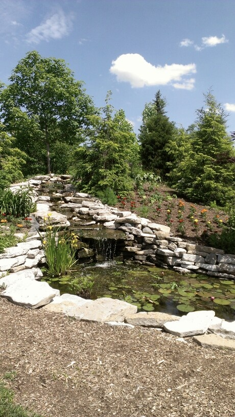 Water Garden Fish Pond Love Pinterest