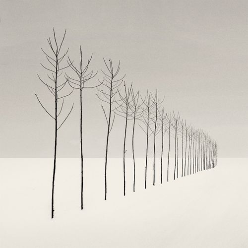 #Graphic. Beautiful picture but a #tree with no #leaves... I guess as long as it is alive ... Varin
