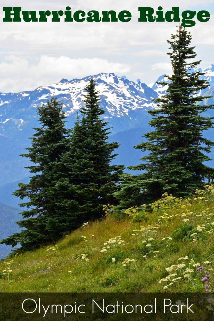 Looking for stunning scenic views in the Pacific Northwest? Head to the Olympic Peninsula in Washington State and take a hike along Hurricane Ridge in Olympic National Park.