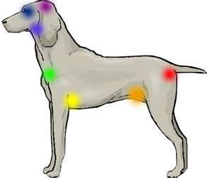 Dog Chakras for Reiki healing:  everything & every being is made up of energy.  Reiki helps us all