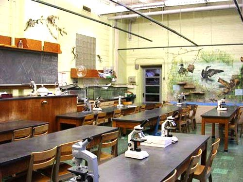 High School Biology Classroom Decorations ~ My old biology classroom arlington high school