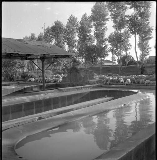 Safareigs fons Cuyàs (1957)