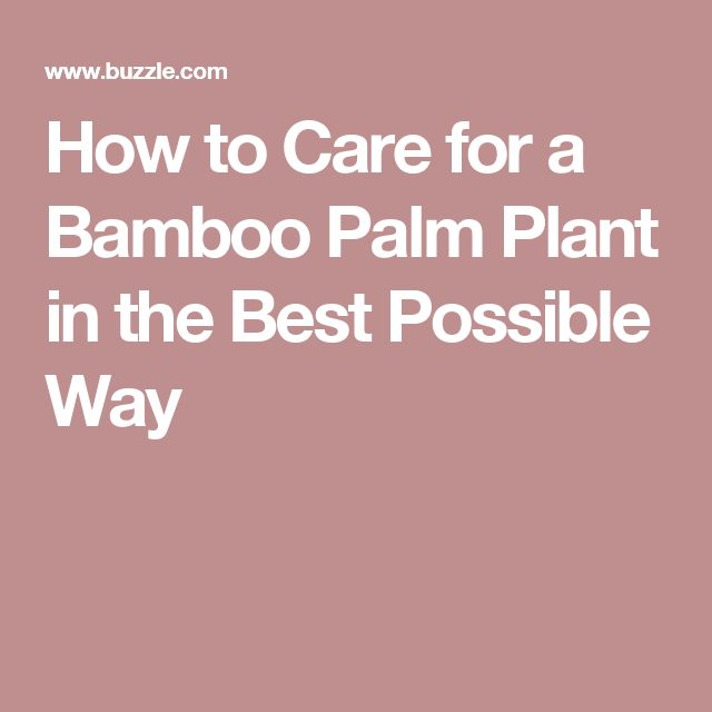 festa no jardim katherine mansfield:1000 ideias sobre Bamboo Palm no Pinterest