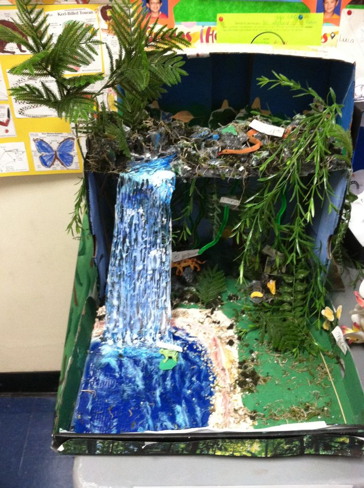 """Biorama"" biome diorama of the tropical forest made by one of my 3rd grade Spanish dual-immersion students."