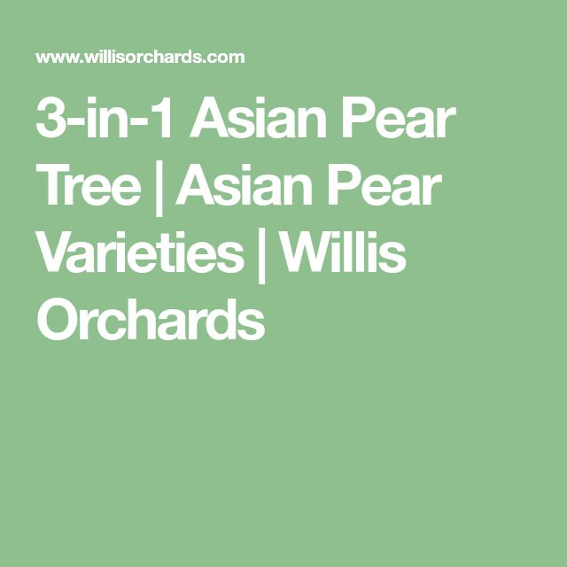 3-in-1 Asian Pear Tree | Asian Pear Varieties  | Willis Orchards