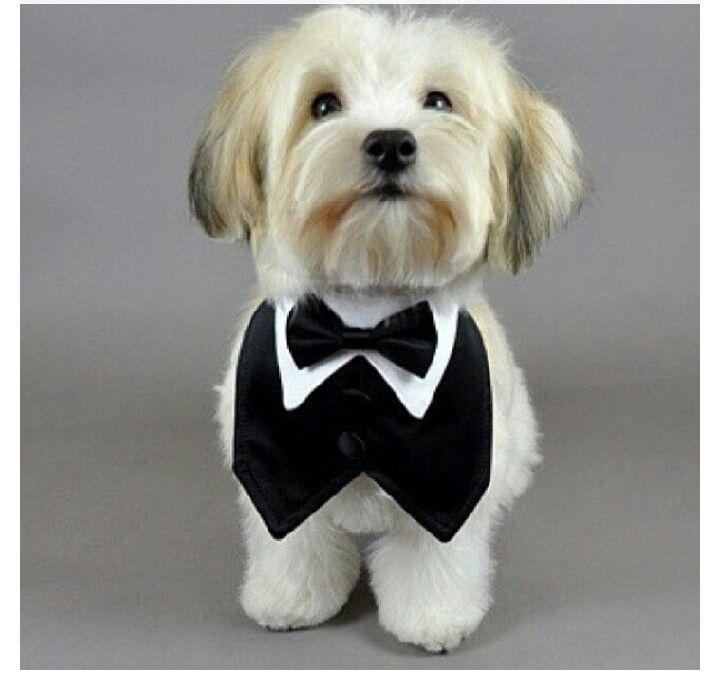 94 best nähen für Hunde images on Pinterest | Dog clothing, Dog ...