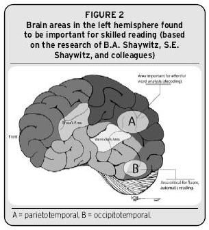 How does dyslexia affect the nervous system