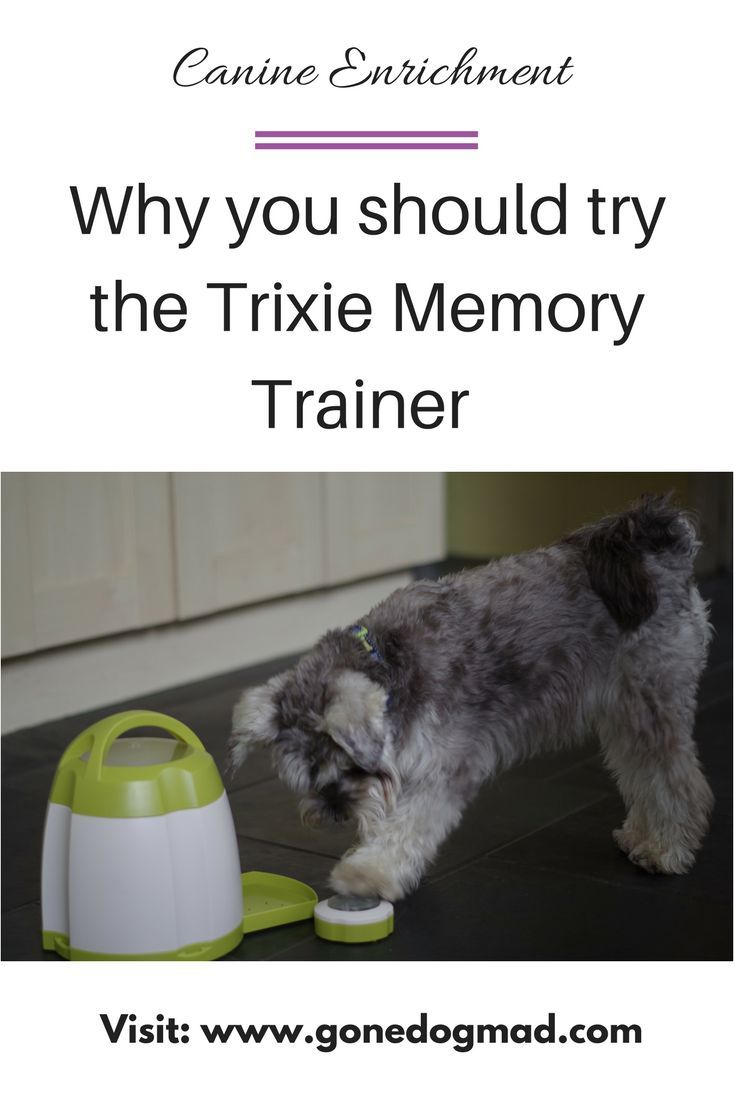 Brain Games For Dogs Trixie Dog Activity Memory Trainer Review With Images Dog Training Obedience Memory Trainer Brain Games For Dogs