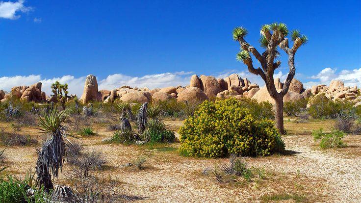 Eden paesaggio desertico sole.