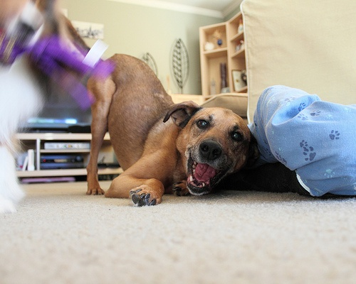 How to Stuff a Kong That'll Make Your Dog Go Nuts