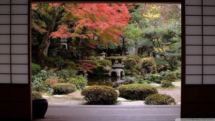 #zengarden #garden #bonsai #japan