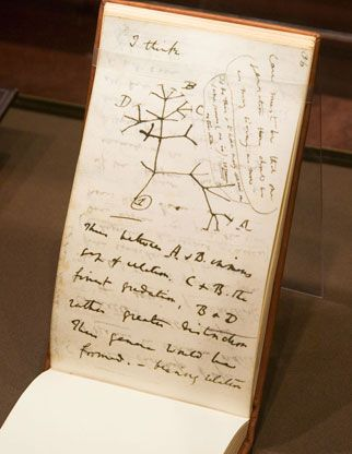 Darwin's notebook - where he began to speculate on the origin of species - here drawing his first evolutionary tree