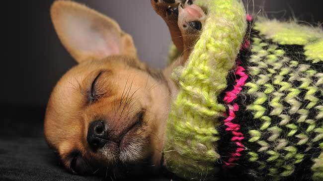 10 photos de bébés animaux endormis   Galeries d'images   Art de vivre   Canoe.ca