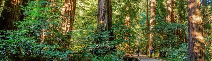 Muir Woods National Monument (U.S. National Park Service)
