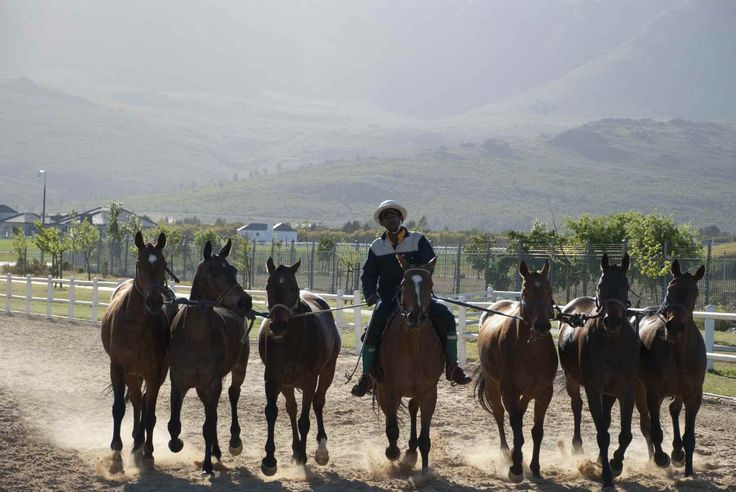 Horse training- Val de Vie Track    http://www.polo-estate-properties.co.za/