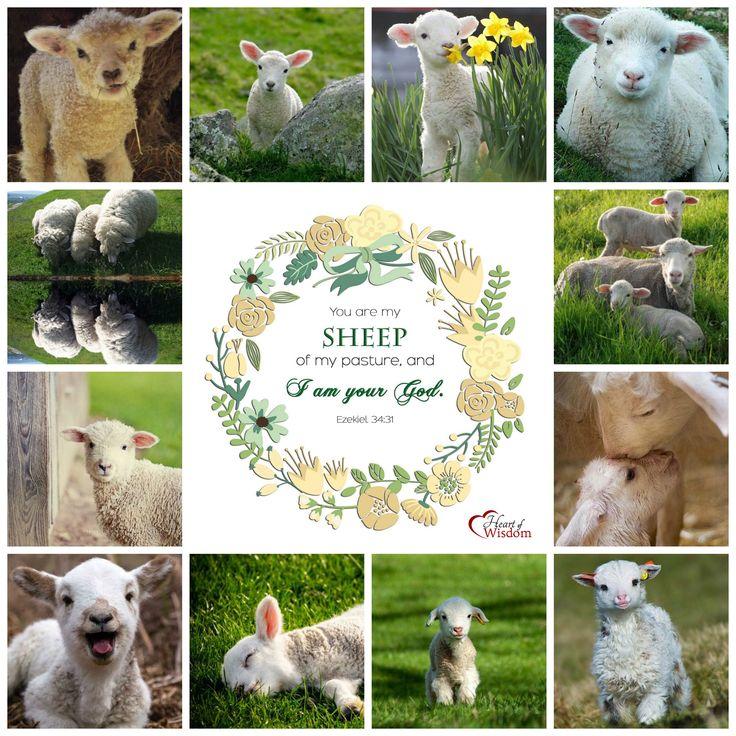 Sheep-Bible-Verse-Collage.jpg (2000×2000)