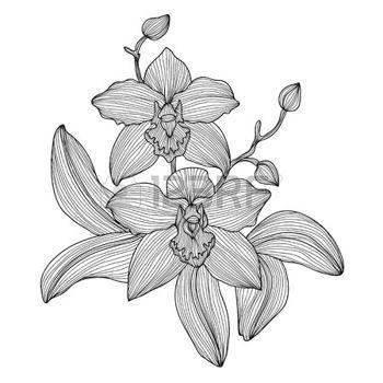 orchidea: Eleganti fiori di orchidea decorativi, elemento di design. Filiale floreale. Decorazione floreale per inviti di nozze vintage, biglietti di auguri, striscioni.