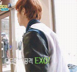 """The greatest moment in exo fandom history (gif)"" - Hahaha I'm dying!"