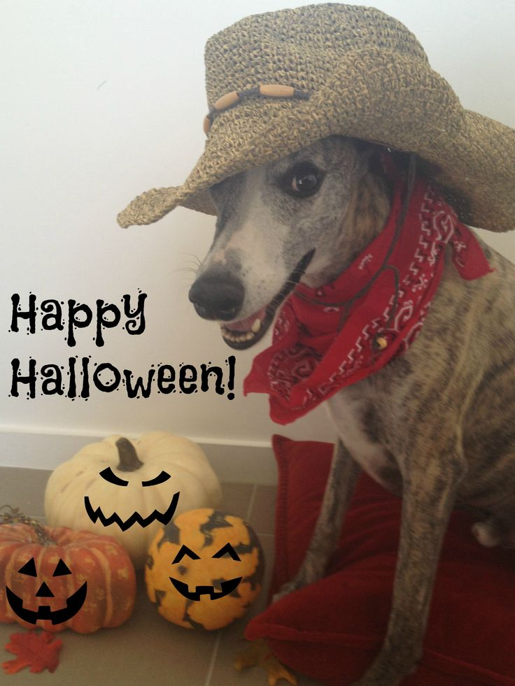 I Heart Whippets Facebook 1000+ images about Whi...