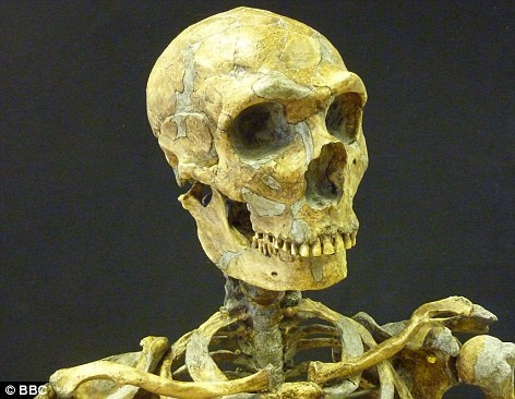 Big ideas: Contrary to belief, Neanderthals had a larger brain size and may have been more intelligent than humans