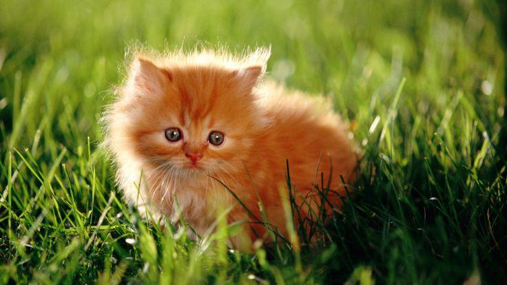 котята смешные котята рисунок котята фото  котята рисунки милые котята котята…