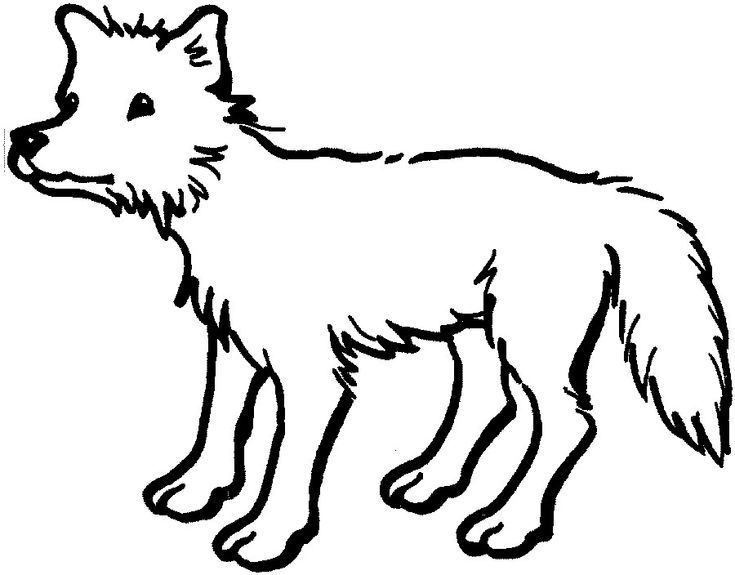 Printable Free Printable Coyote Coloring Pages For Kids Pdf Animal Coloring Pages Pencil Drawings Of Animals Easy Animal Drawings