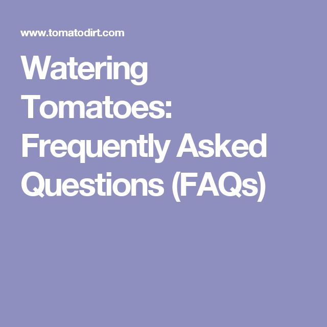Watering Tomatoes: Frequently Asked Questions (FAQs)