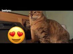 Compilation de chats rigolos #animal #animaux #chat #chaton #felin #felins #félins #sauvage #rire #drole #humour #blague #blagues #drôle #rigolo #rigoler #video #videos #vidéo #vidéos #youtube