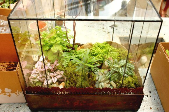 Gardening on the miniature. Terrariums! ... In a fish tank