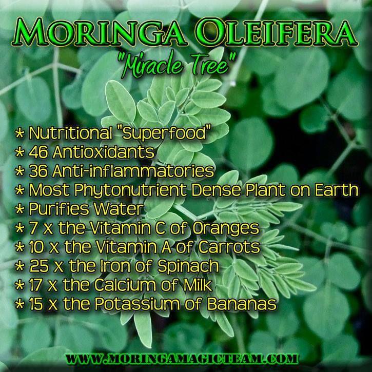 "Moringa Oleifera ""Miracle Tree"" ♥ MORE moringa infographics and product ~ http://healthwellnessbeautyinspiration.blogspot.ca/p/moringa-food-as-medicine.html #moringa #health #superfoods"