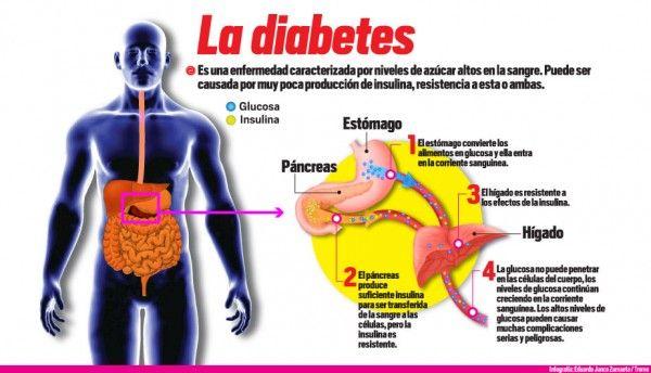 ¿Qué es la diabetes? Es una enfermedad crónica que se caracteriza porque el organismo de la persona que la padece, produce un exceso de glucosa. El proceso digestivo es el que se encarga de sintetizar todos los alimentos que ingerimos y los convierte en azúcar. Una vez que ingresa en la sangre, al azúcar se ...