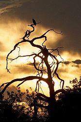 TWA-0000047 © WestPix Africa sunset, Botswana.