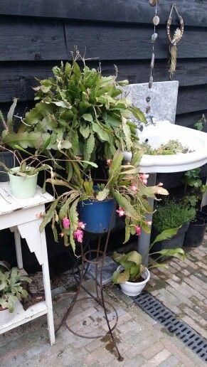 Oude wastafel op de regenpijp