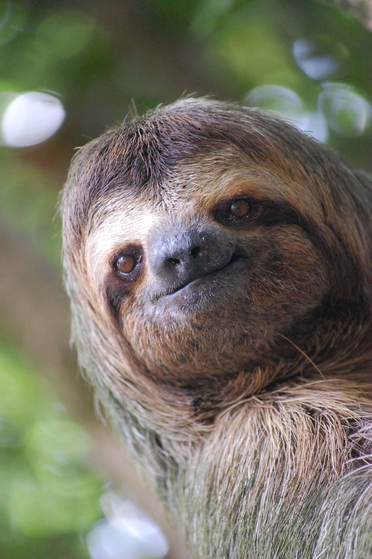 Sloth going to the bathroom - I Love Sloths Just Adore Them