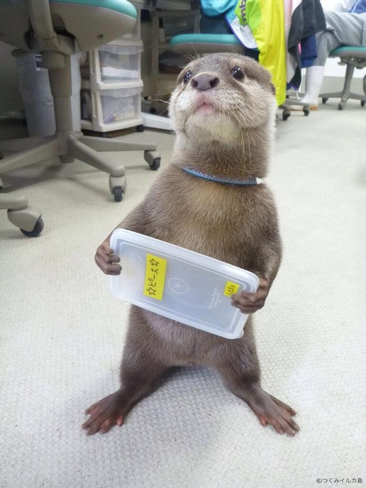 Otters are just too cute I love them