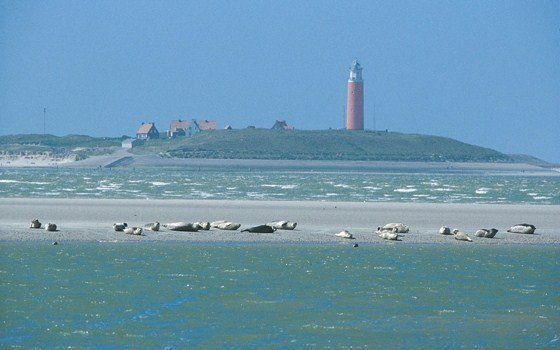 Texel is 30 kilometers long, which makes it the largest Wadden island. Texel is known for its fantastic beaches, beautiful nature scenes, loads of activities and great nightlife. Another characteristic of the island are the thousands of sheep.