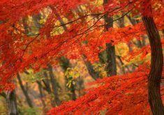 autumn desktop wallpapers 216