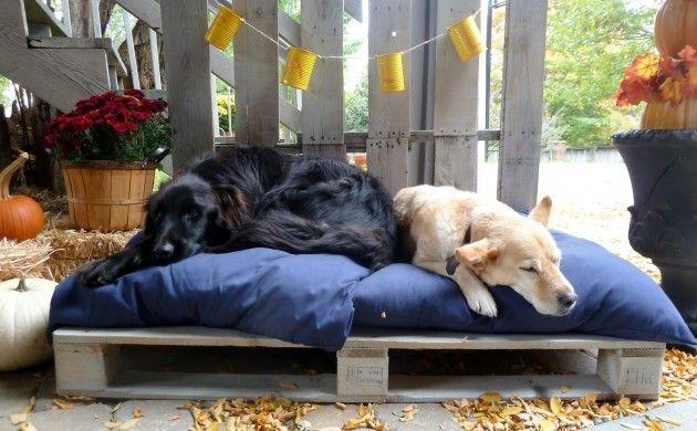 25 einzigartige hundebett paletten ideen auf pinterest hundebetten hundebett aus holz und - Hundebett ideen ...