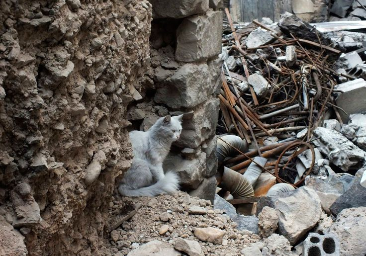 A cat sits among debris from damaged buildings in Juret al-Shayah in Homs on November 1, 2012. (Yazan Homsy/Reuters)