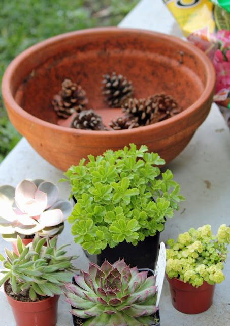 Use pinecones at the bottom of container ~ makes it much lighter and will draining better ~ Planting A Succulent Garden