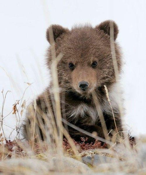 #bear #cub