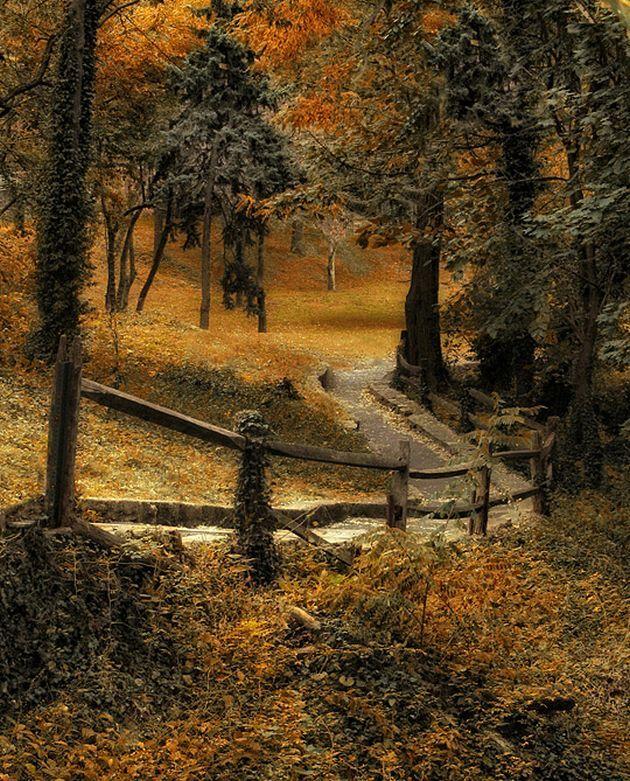 Old hickory split-rail fence along rural road