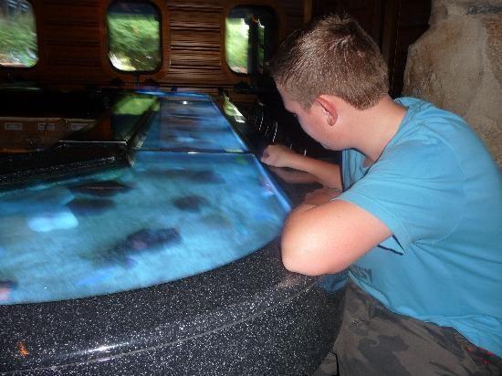 Aquariums & Fish Tanks on Pinterest   Aquarium, Fish Tanks and ...
