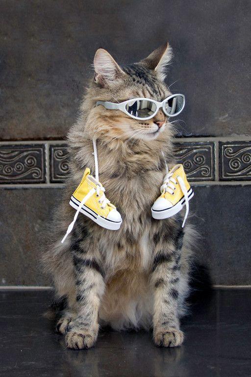 mostlycatsmostly / cool cat