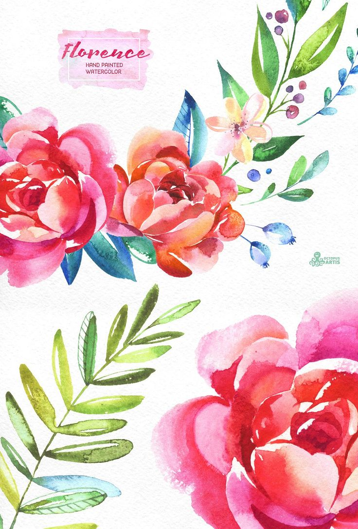 Florence. Floral Collection by OctopusArtis on @creativemarket