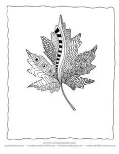 Zentangle Fall Leaves Maple leaf coloring sheets