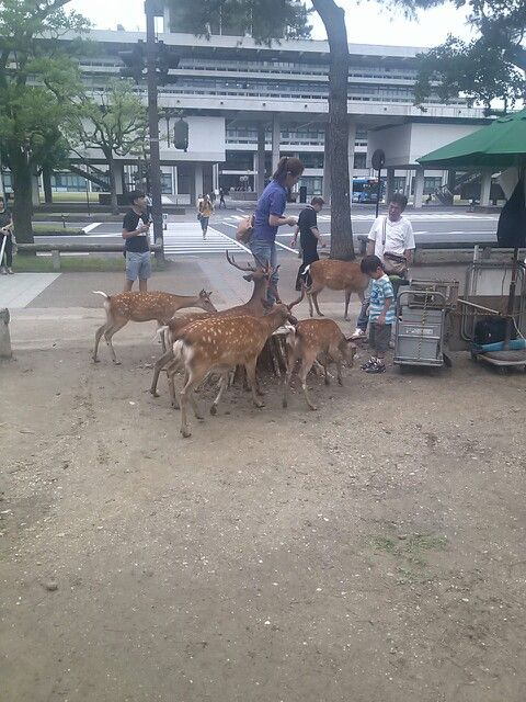 #nara #narapark #deer #奈良 #奈良公園 #鹿 さん ドバー