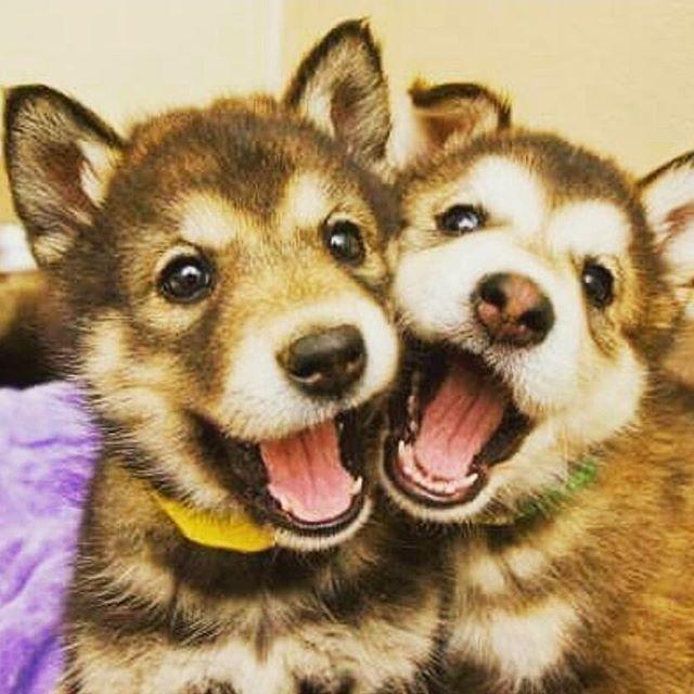 Best friends?! Tag Yours!! ❤❤❤ #cute #friends #cutest #tagsforlikes #followback #pets